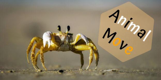 Animal Move